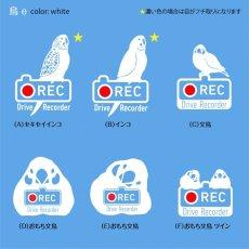 画像1: <Drive Recorder ●REC>カッティングステッカー (インコ・文鳥)  デザイン・英・日メッセージが選べます! (1)