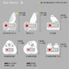 画像3: <Drive Recorder ●REC>カッティングステッカー (インコ・文鳥)  デザイン・英・日メッセージが選べます! (3)